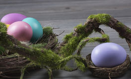 Easter eggs with moss brunch Stock Photo