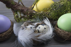 Easter eggs with moss brunch Stock Image