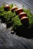Easter eggs on moss, Easter nest Stock Photography