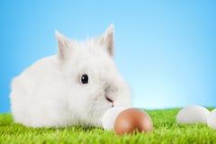 Easter eggs. Easter motive. White Easter Bunny Stock Photo