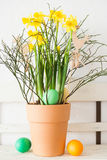 Easter eggs and narcissus Stock Images