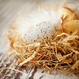 Easter eggs in nest Royalty Free Stock Photography