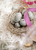 Easter Eggs In A Nest. Speckled blue Easter Eggs in a nest on feathers and a pink ribbon Royalty Free Stock Photos
