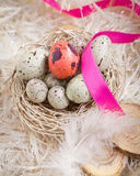 Easter Eggs In A Nest. Speckled blue Easter Eggs in a nest on feathers with one single red one and a pink ribbon Royalty Free Stock Photography