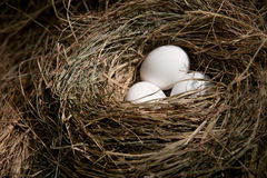Easter eggs in nest Royalty Free Stock Photos