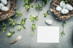 Easter eggs nest with bird feathers and blank white paper card Royalty Free Stock Photo