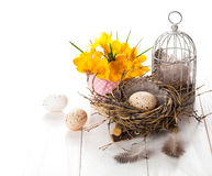 Easter eggs nest with birdcage and yellow Spring Crocus Royalty Free Stock Photo