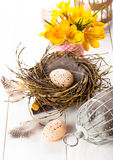 Easter eggs nest with birdcage and yellow Spring Crocus Royalty Free Stock Photos