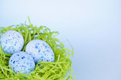 Easter eggs in nest on blue background Stock Image