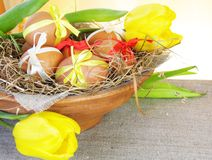 Easter Eggs in Nest Bowl with Tulips Stock Image