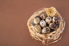 Easter eggs in a nest on brown. Background Stock Photography