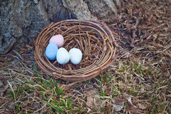 Easter Eggs in Nest. Colorful Easter Eggs in a nest at the base of a tree Stock Images