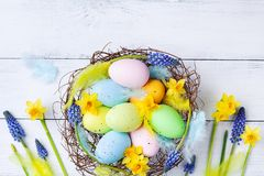 Easter eggs in nest, feather and spring flowers on white table top view. Holiday card or banner.  royalty free stock image