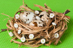 Easter eggs in a nest with florets. Easter eggs in a nest with  florets Royalty Free Stock Photos