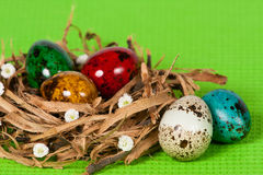 Easter eggs in a nest with florets. Colored Easter eggs in a nest with florets Stock Image