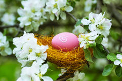 Easter eggs in a nest in flowering garden Royalty Free Stock Photo