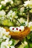 Easter eggs in a nest in flowering garden Stock Images
