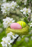 Easter eggs in a nest in flowering garden Royalty Free Stock Images