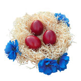 Easter eggs in nest with flowers Stock Image