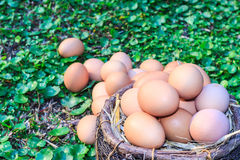 Easter eggs in nest on green grass background. Stock Images