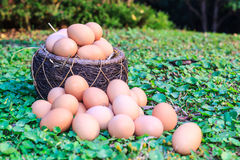Easter eggs in nest on green grass background. Stock Photography