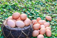 Easter eggs in nest on green grass background. Stock Image