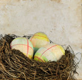 Easter Eggs in a Nest on grunge Royalty Free Stock Photography