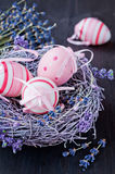 Easter eggs in a nest with lavender flowers Stock Image