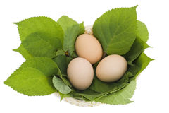 Easter eggs in a nest from leaves Stock Images