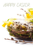 Easter eggs in the nest with narcissus Stock Photography