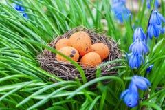 Easter eggs in nest near flowers Stock Images