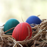 Easter Eggs in a nest outdoor Royalty Free Stock Photography