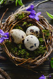 Easter eggs in the nest. Easter quail eggs in the nest on the wooden background Stock Photos