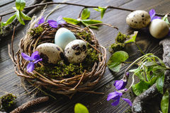 Easter eggs in the nest. Easter quail eggs in the nest on the wooden background Royalty Free Stock Photography