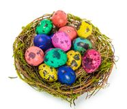 Easter eggs in the nest Stock Images