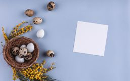 Easter eggs in nest and spring flowers on blue background with letter. Top view with copy space. Happy Easter card.  royalty free stock photo