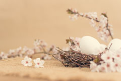 Easter eggs in nest with spring flowers Royalty Free Stock Image