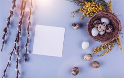 Easter eggs in nest and spring flowers on holiday background. Top view with copy space. Royalty Free Stock Images