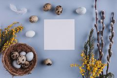 Easter eggs in nest and spring flowers on holiday background. Top view with copy space. Happy Easter card. Stock Photos