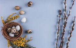 Easter eggs in nest and spring flowers on holiday background. Top view with copy space. Happy Easter card. Stock Image