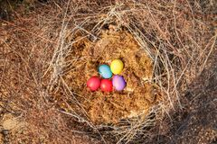 Easter eggs in a nest of straw branches lie on a moss. Easter colored eggs in a nest of straw branches lie on a moss Royalty Free Stock Photography