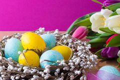 Easter eggs in nest and tulips. Easter background with blue and yellow eggs in nest and colorful tulips. royalty free stock photography