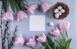 Easter eggs in nest and tulips flowers on spring background. Top view with copy space. Happy Easter card. Stock Image
