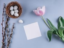 Easter eggs in nest and tulips flowers on spring background. Top view with copy space. Happy Easter card. Royalty Free Stock Image