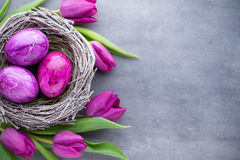 Easter eggs in the nest und tulip. Gray background. Royalty Free Stock Photo
