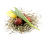 Easter eggs in nest on white Stock Images