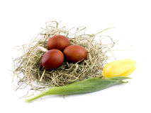 Easter eggs in nest on white Royalty Free Stock Photos