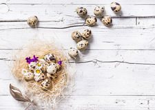 Easter eggs in nest on white background. Royalty Free Stock Images