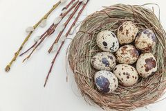 Easter eggs in the nest and willow branch stock photos