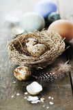 Easter eggs and nest  on wooden background Royalty Free Stock Image
